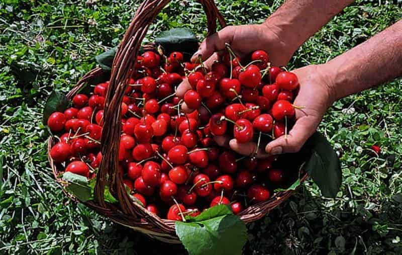 elenchi lavoratori agricoli 2017