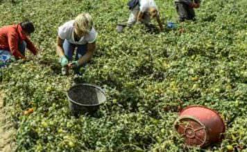 Calcolo disoccupazione agricola