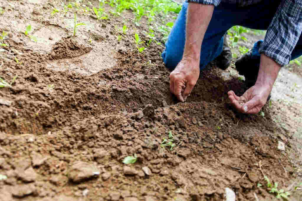 Come richiedere disoccupazione agricola 2018 Inps