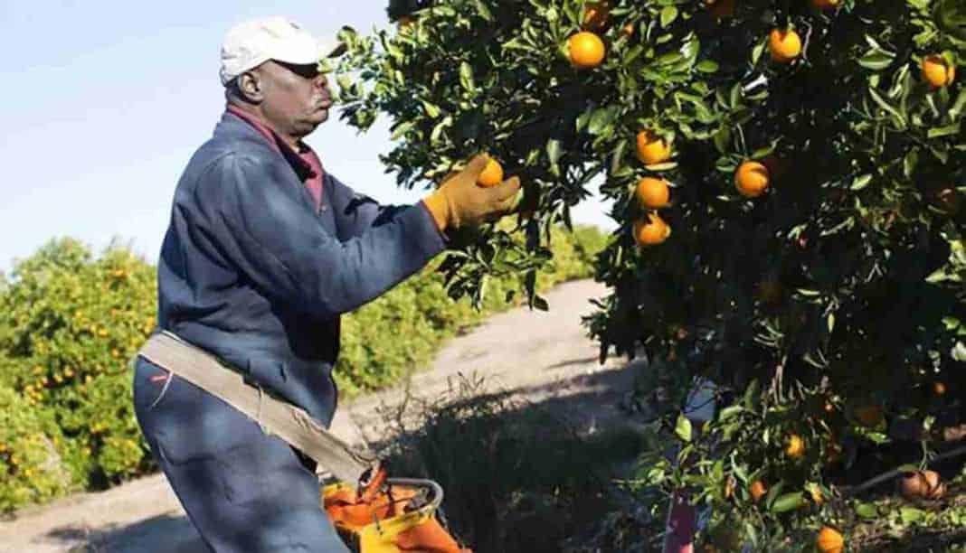 Elenchi lavoratori agricoli quarta variazione 2017