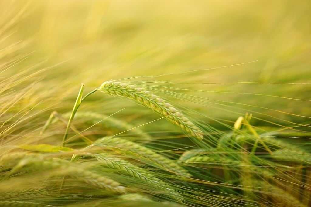 Come fare la Domanda disoccupazione agricola 2019 Inps