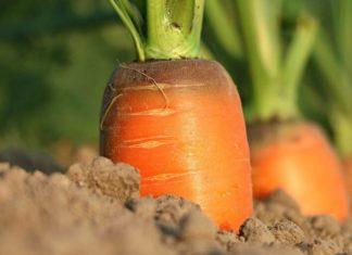 Disoccupazione Agricola 2020: quando presentare la domanda, giornate massime e calcolo