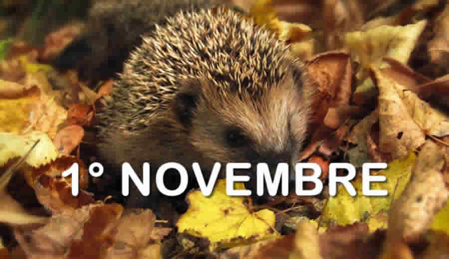 1 Novembre in Busta Paga - E' un giorno festivo?