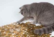 Pensioni basse pagamento importo aggiuntivo