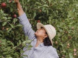 Come visualizzare elenchi lavoratori agricoli 2020